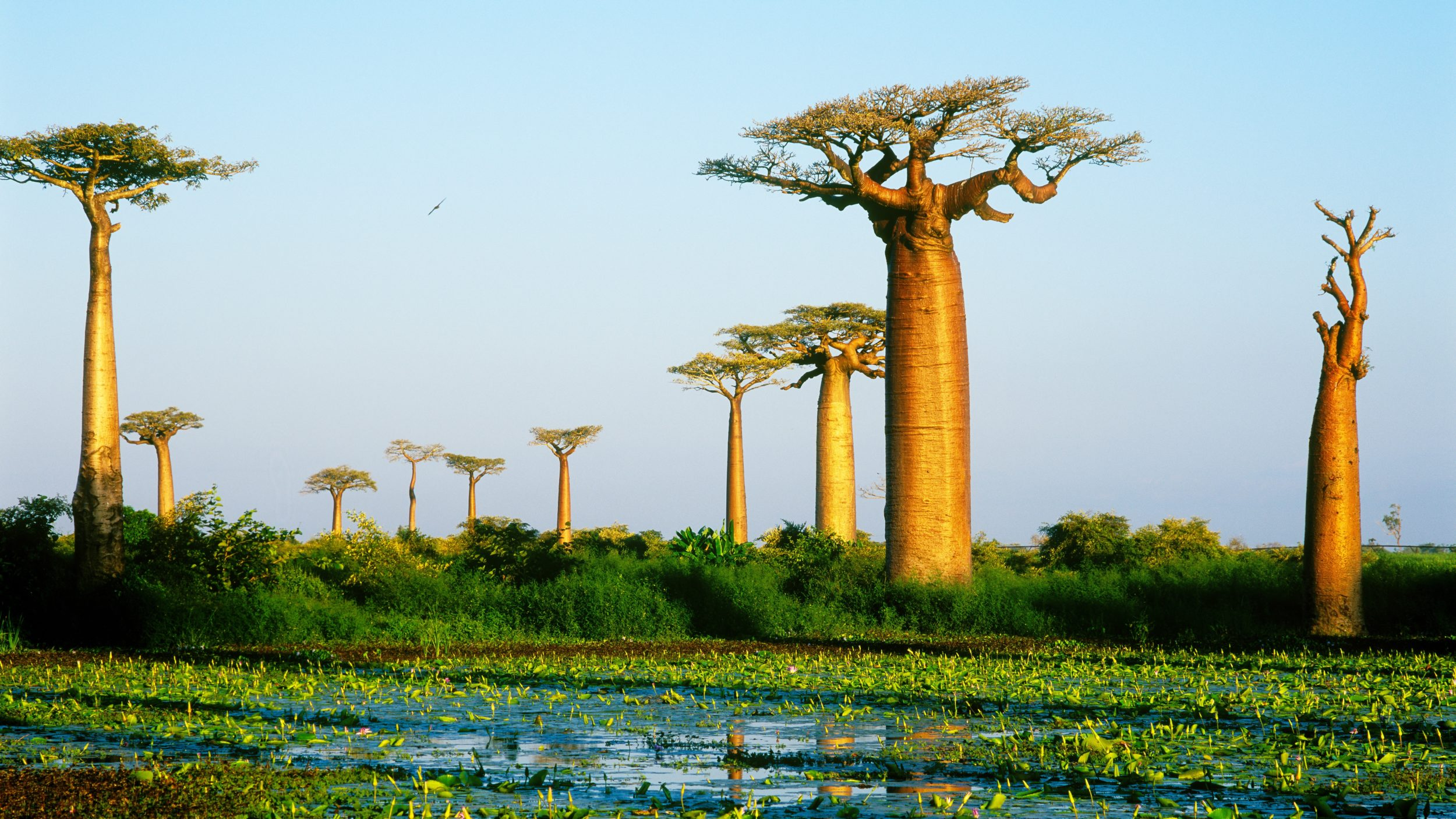 Madagascar [shutterstock]
