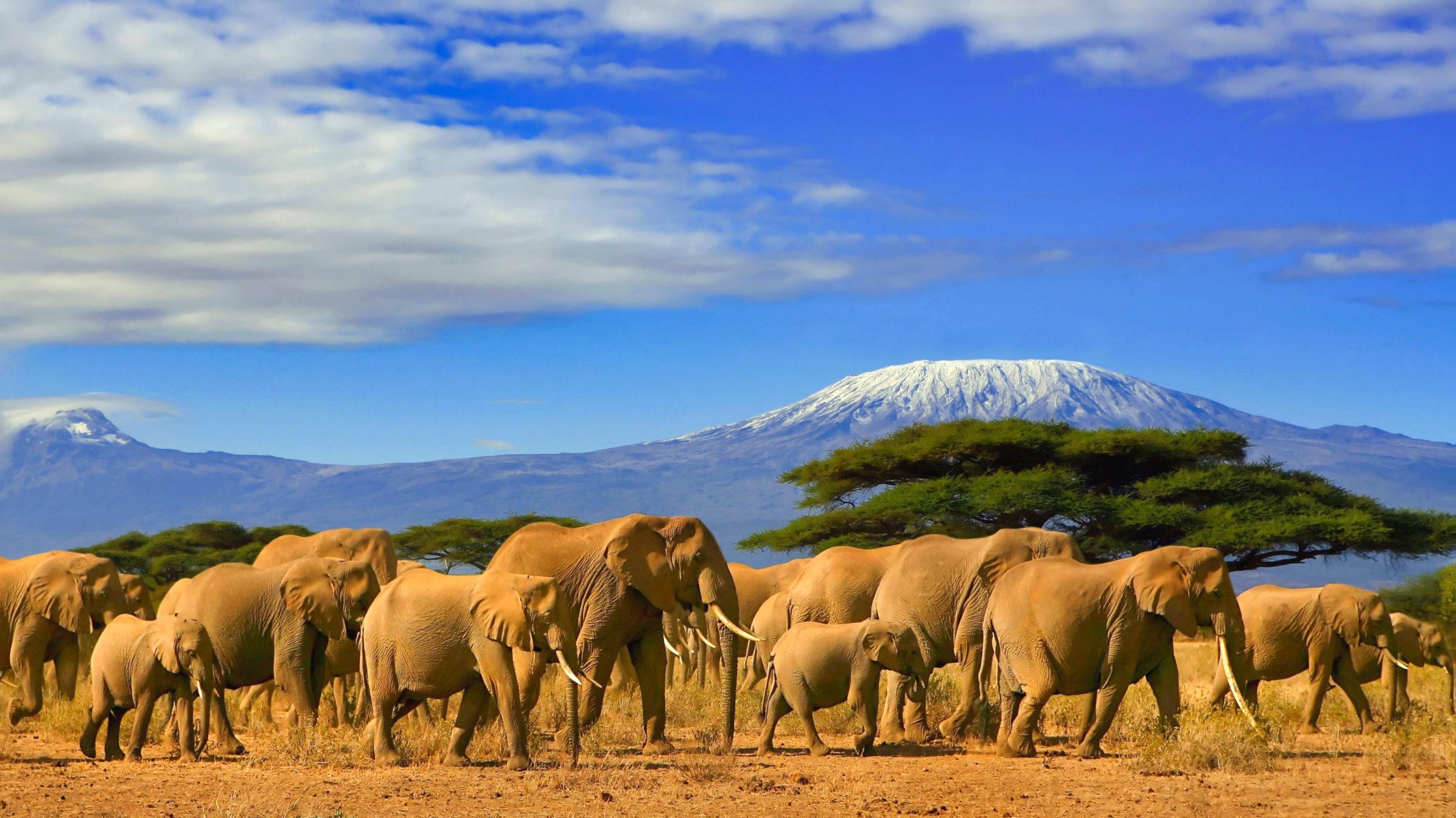 Tanzania [shutterstock]