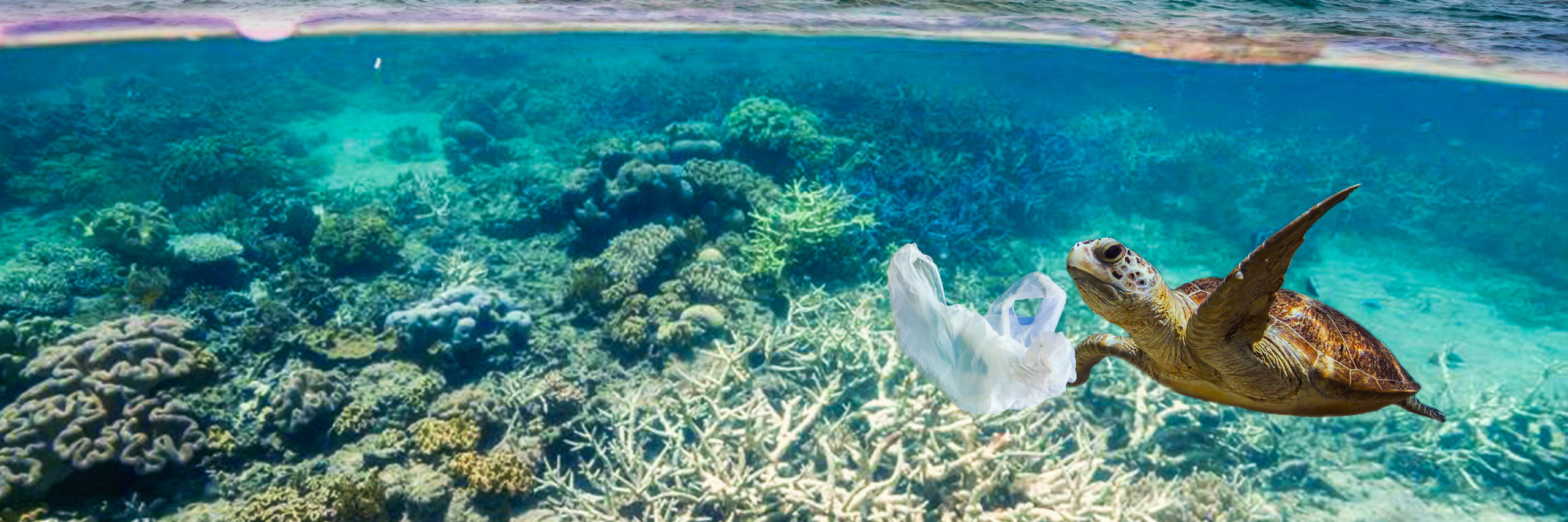Drifting plastic bag and a turtle - Image [Shutterstock]