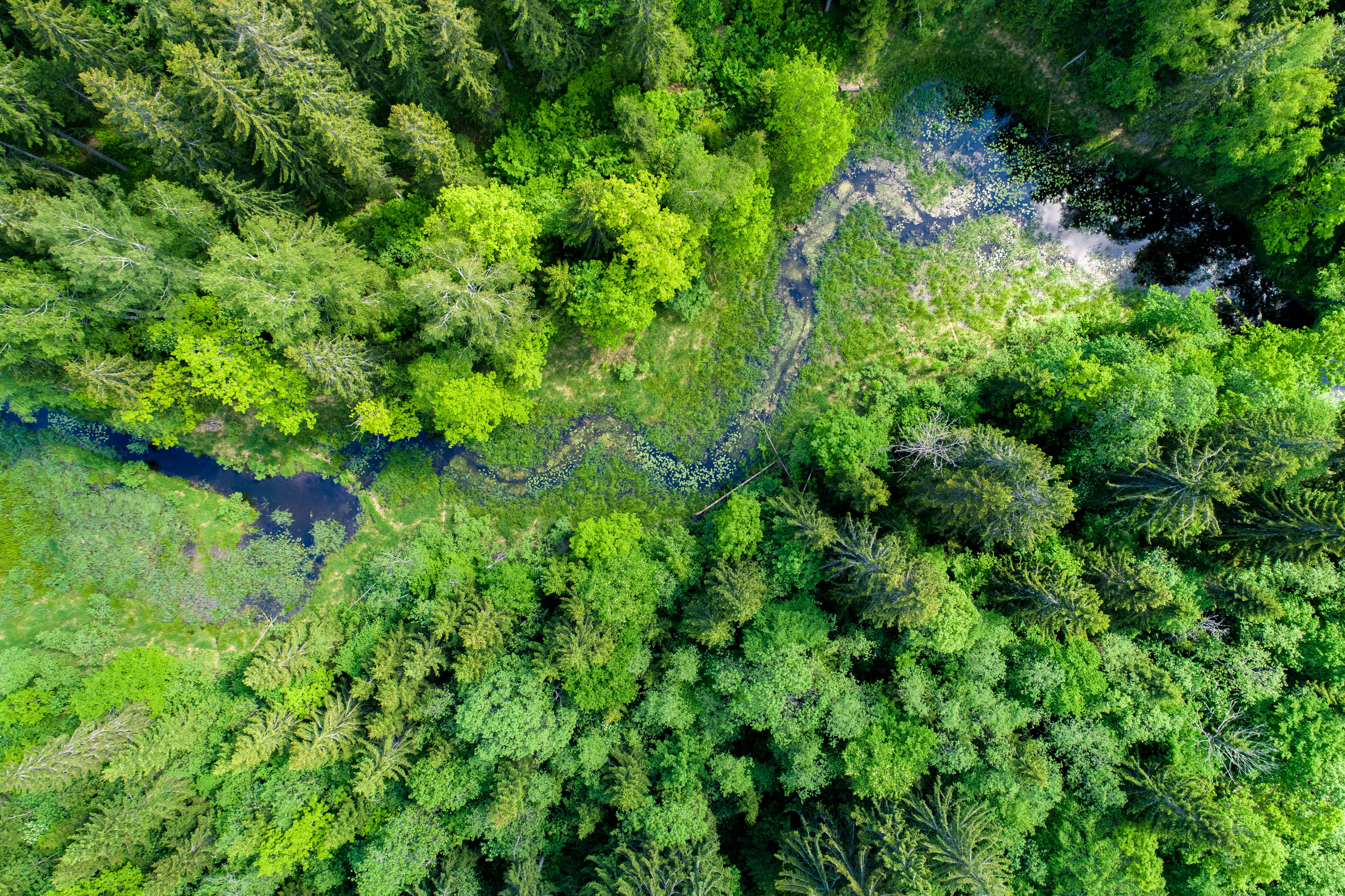 Green forest, swamp and small river captured from above with a drone. - Image