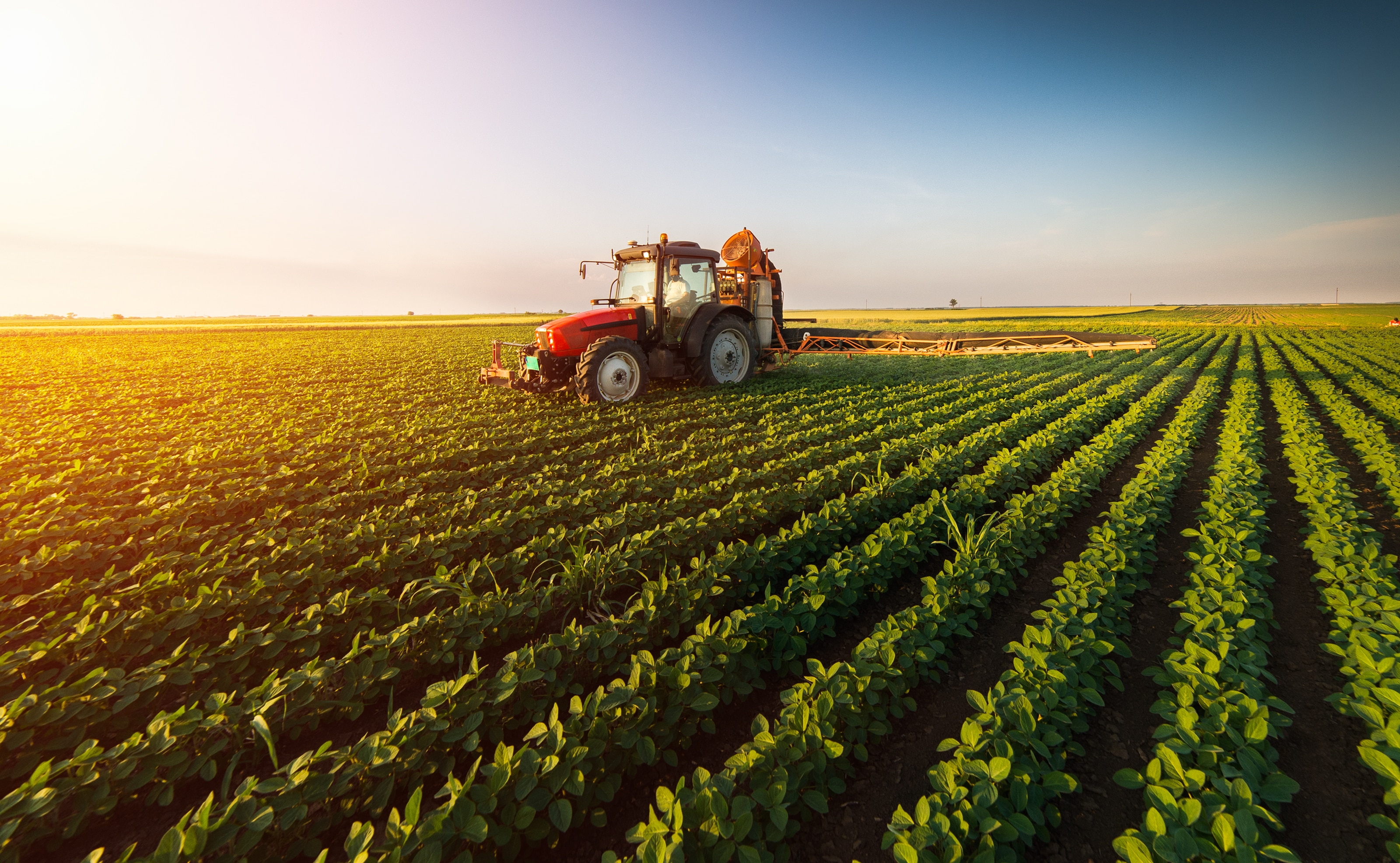 Tractor spraying pesticides on soybean field with sprayer at spring - Image