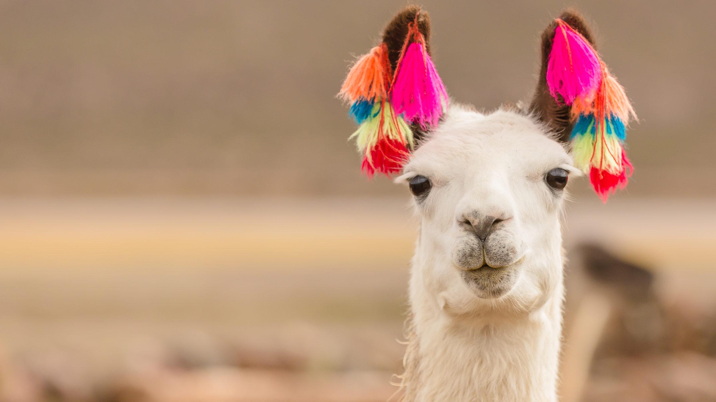 Bolivia [Shutterstock]