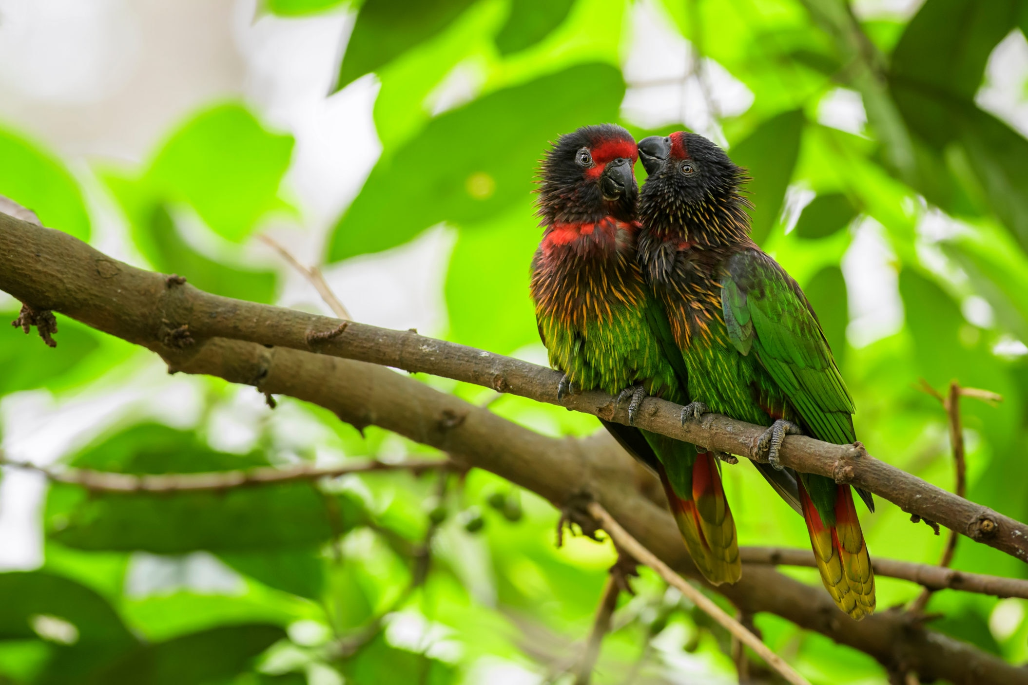 Papua New Guinea. [Shutterstock]