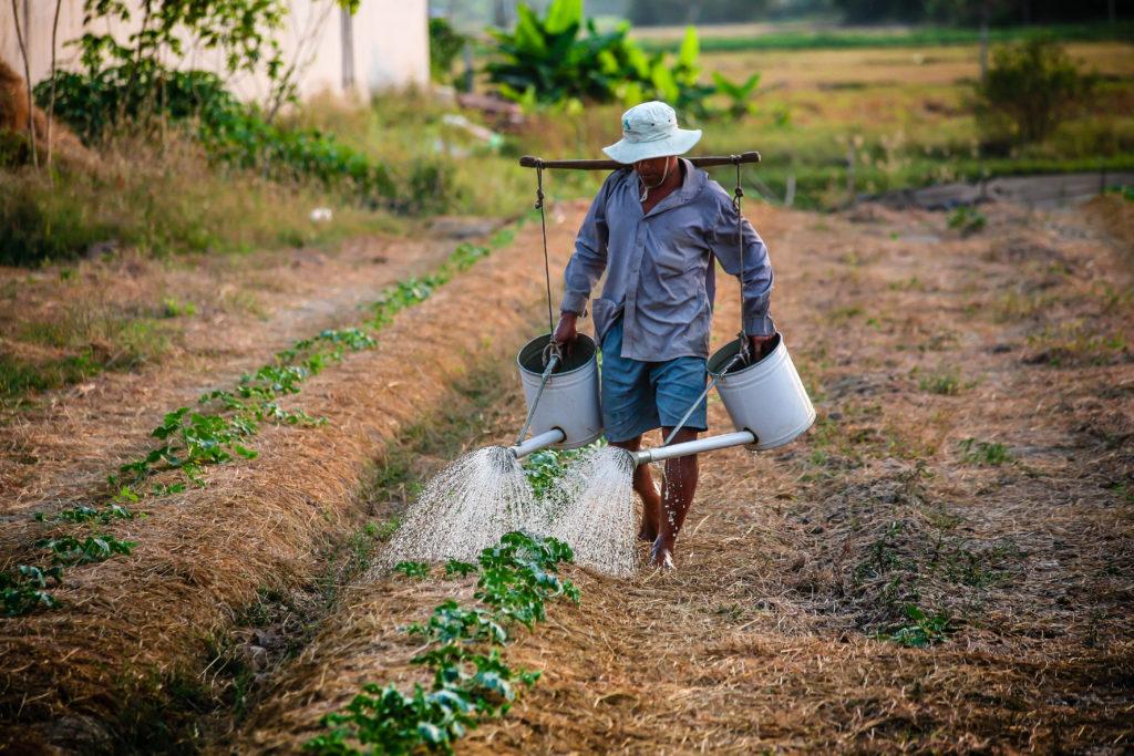 Man watering crops. (Pixabay; 2016)