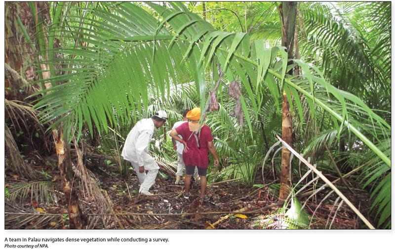 Date: 2017 Description: A team in Palau navigates dense vegetation while conducting a survey. © Photo courtesy of NPA.
