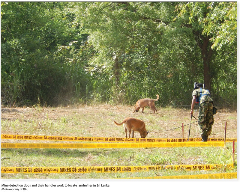 Date: 2017 Description: Mine detection dogs and their handler work to locate landmines in Sri Lanka. © Photo courtesy of MLI.