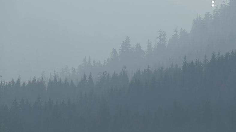 Layered treelines are seen through smoke-filled air.
