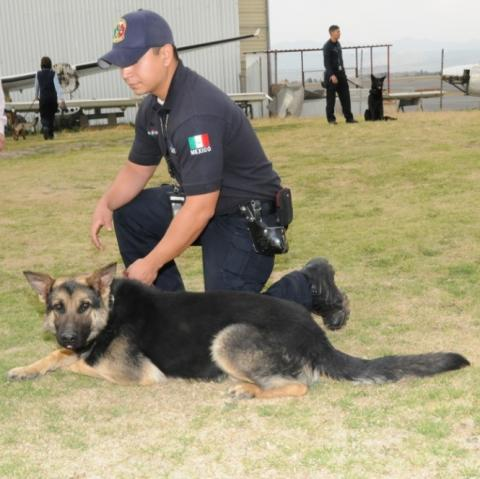 A Mexican law enforcement officer pets a canine that is trained to detect narcotics.