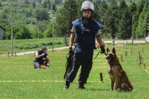 "Mine detection dog (MDD) ""Bittersweet"" with her handler in Bosnia and Herzegovina. Photo courtesy of MLI."