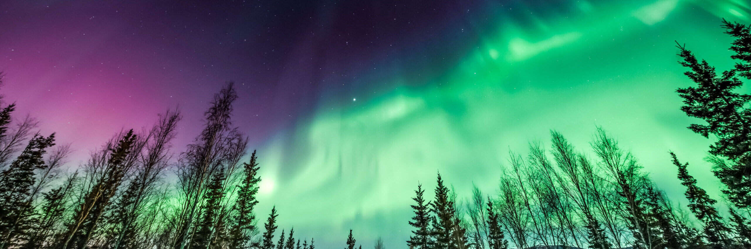 Purple and green Northern Lights in wave pattern over trees [shutterstock]