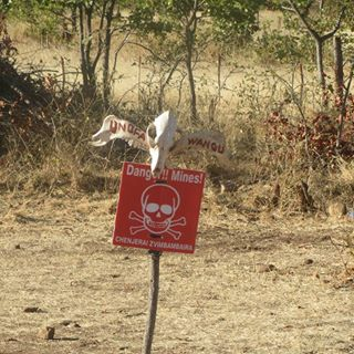 "A cattle skull painted with the Shona words for ""mine"" and ""you die"" warn Zimbabweans to keep out of this minefield. Livestock are common victims of landmines, causing severe financial losses for their owners. (Department of State photo)"