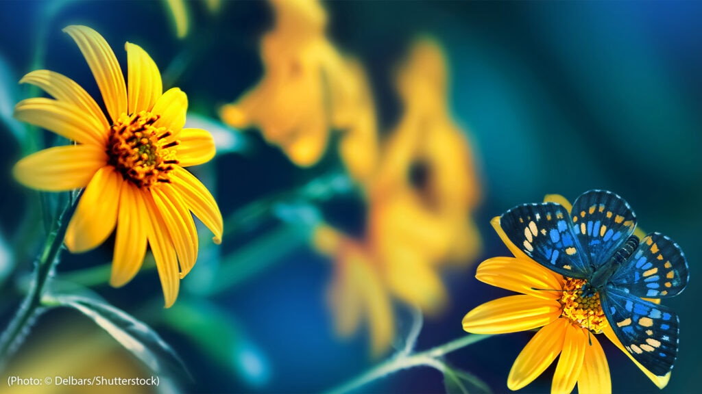 Small yellow bright summer flowers and tropical butterflies are pictured on a background of blue and green foliage in a garden.